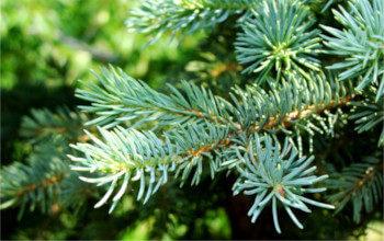 Новый Год - хороший повод посадить дерево